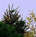 arbres.jpg: 972x1000, 140k (10 mars 2016 à 20h09)