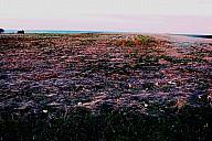 grandangle.jpg: 1000x665, 161k (10 mars 2016 à 20h09)