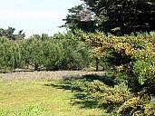 arbres.jpg: 1000x750, 140k (July 03, 2021, at 01:02 PM)
