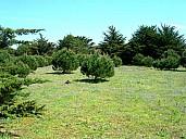 arbres2.jpg: 800x600, 89k (July 03, 2021, at 01:02 PM)