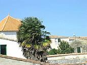palmier.jpg: 650x487, 54k (10 mars 2016 à 20h15)