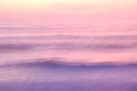 Brouillarose.JPG: 1200x796, 60k (10 mars 2016 à 20h39)