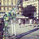 Girafe marche.jpg: 1440x1440, 803k (10 mars 2016 à 20h53)